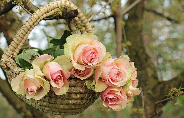 roses 2205014 640