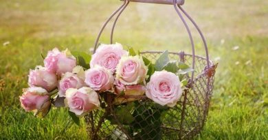 roses 1566792 640